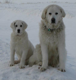 Limba and Rosa in the snow